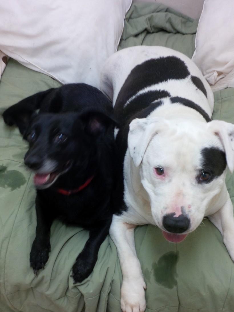 Sampson and Ebony
